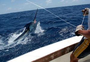 Ловля рыбы-меч