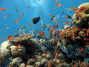 Морские кораллы