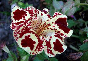 Gubastik flower