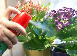 Обработка растений для профлактики