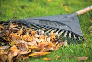 Очищение газона от сухих листьев
