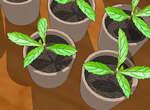 Первые всходы растения