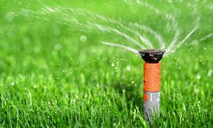 Полив газонной травы