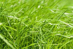 Зеленый газон