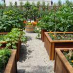 Создаем идеальный огород без лопаты (фото и видео инструкции)