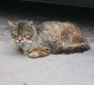 Больной кот на улице