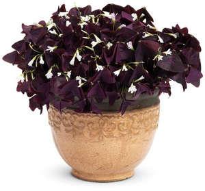 Kislitsy bloom