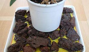 Горшок с растением на керамзите