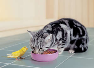 Cat eats food from a bowl