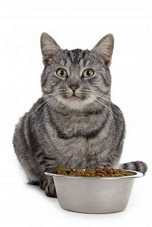 Cat and bowl with food