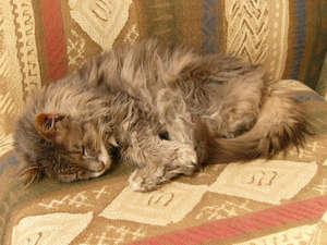 Кот спит на кресле