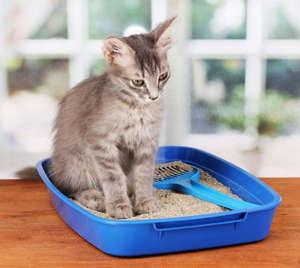 Чумка у котят симптомы лечение