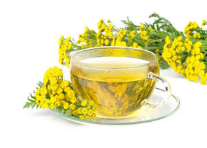 Tansy decoction