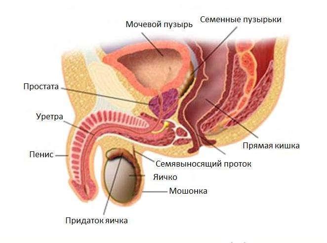 как можно выявить паразитов в организме человека