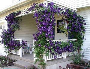 Лианы цветов на веранде