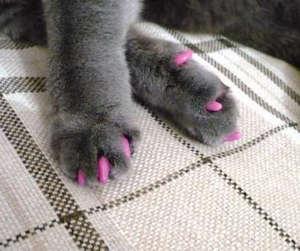 Antitsarapki for cats