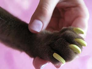 антицарапки для кошек инструкция