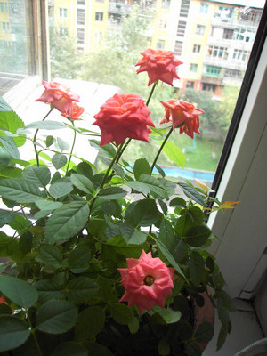 Flower on the windowsill
