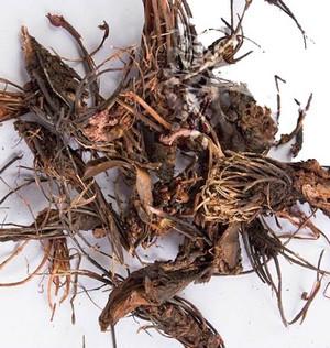 Red brush root
