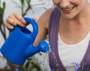Watering plants from watering cans