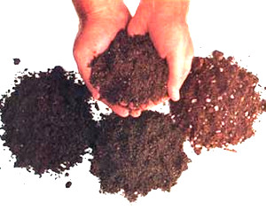 Soil for sowing seeds