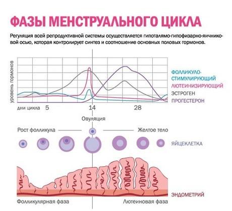 28day ovulation