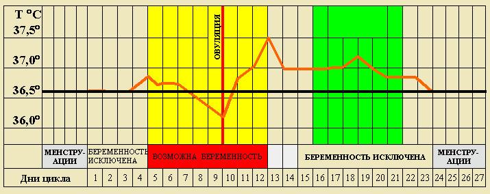 Как рассчитать когда происходит овуляция и зачатие мальчика или девочки?