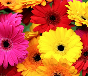 Red, yellow and pink flowers