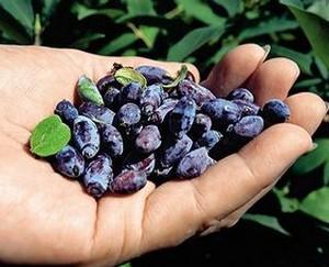 Handful of berries in hand