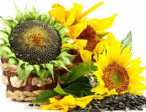 Sunflowers with sunflower seeds