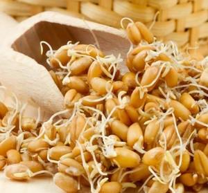Как прорастить пшеницу для браги
