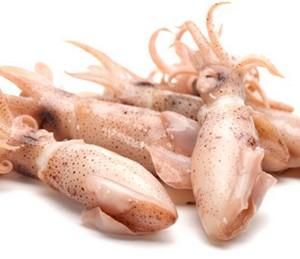 Live Squids