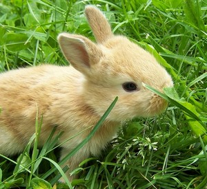 Чем можно кормить кроликов в домашних условиях?