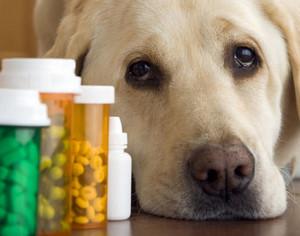 Dog and pills