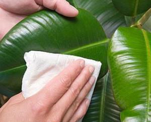 Wipe foliage with a napkin
