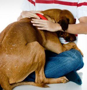 Master Hugs His Dog