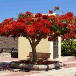 Можно ли вырастить тюльпановое дерево самому?