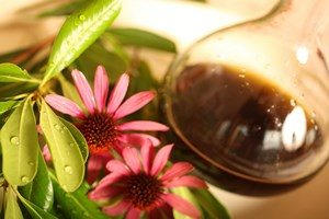 Echinacea flowers and infusion in a bottle