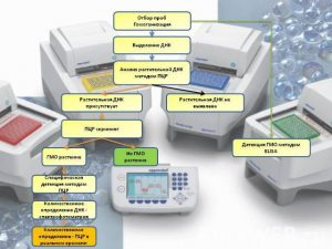 stages of pcr analysis