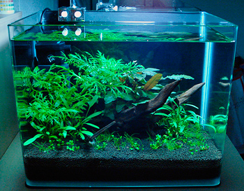 what aquarium soil to choose