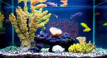 soil for plants in an aquarium
