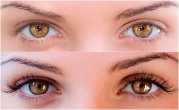 Paint for eyebrows and eyelashes varieties