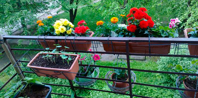 Proper decoration of the balcony flowers