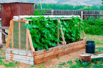 simple greenhouses from the frames with their own hands