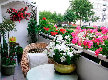 What flowers will bloom all summer on the balcony