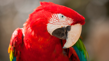 about macaw parrot