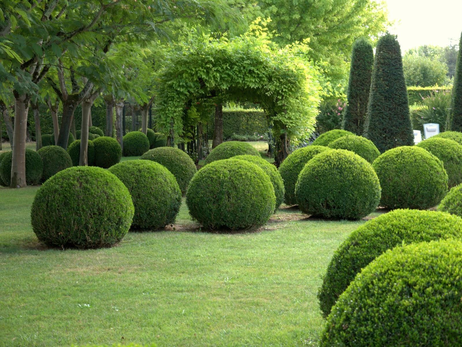 если самшиты где посадить в саду фото изобилие