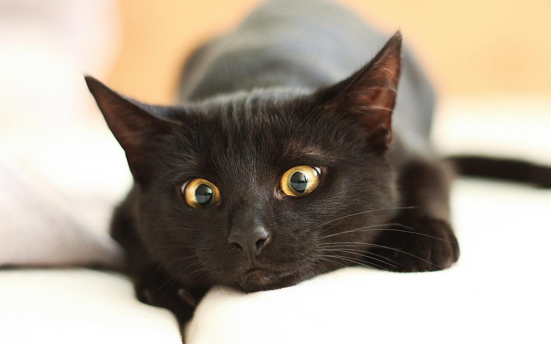 закрываются котята с карими глазами фото нужно